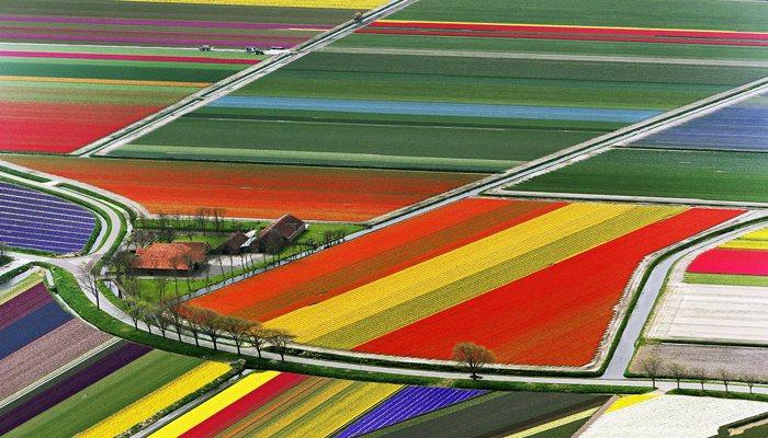 Olanda fiori
